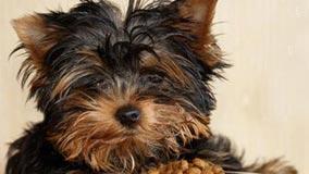 Esterilización de perros: Yo no me la juego